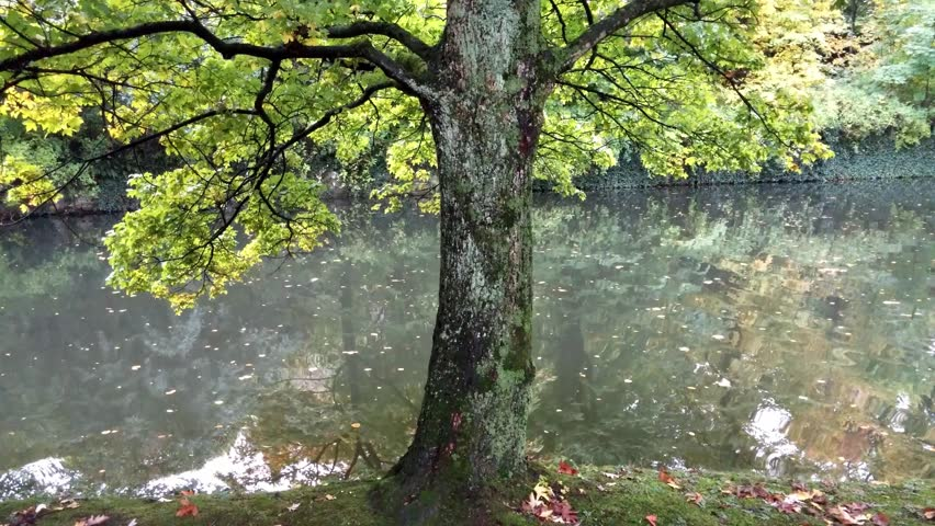 Tree branches over the water of pond  | Shutterstock HD Video #13146509