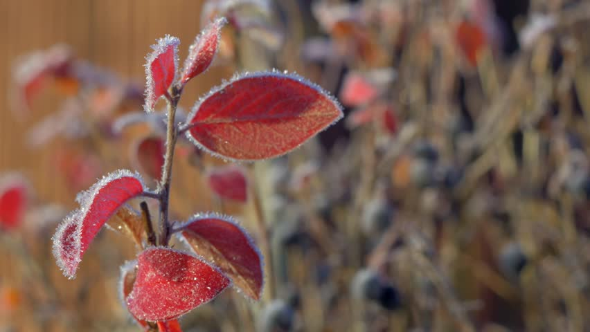 Header of cotoneaster
