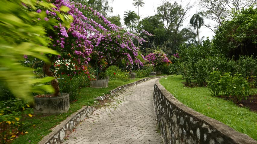 Blossom trees in Hibiscus Garden, Perdana Botanical Garden, Kuala Lumpur. Camera move along the pathway, purple, red and white flowers covering the bush and trees. Tropical garden, rainy weather