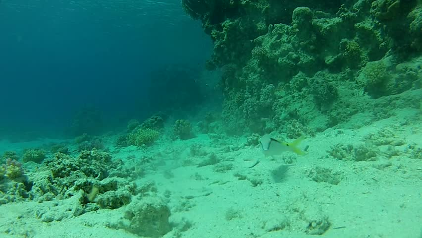 Beautiful fish and clean water. The corals on the bottom. #13294679