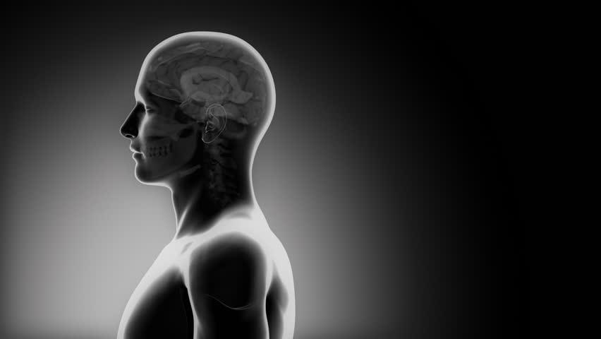 Header of cerebrum
