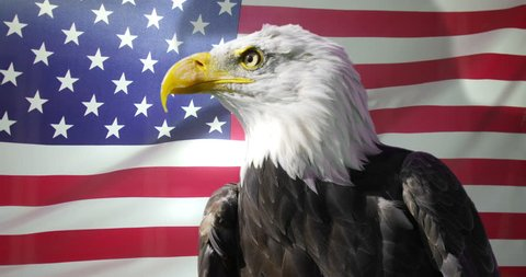 4K Close up of American Bald Eagle against animated background of American flag waving in the wind. Shot on RED Epic.