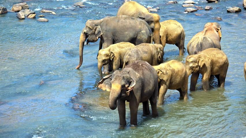 Free photo: Elephant, Herd Of Elephants - Free Image on Pixabay ...