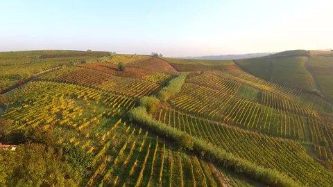 vineyard by drone