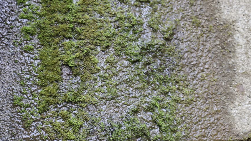 Rock Wall Covered In Moss From Constant Dripping Water Stock Footage ...