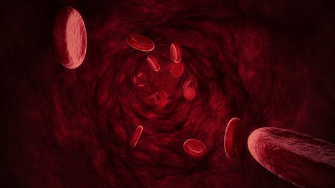 Realistic 3D blood cells in a blood vein (seamless loop)