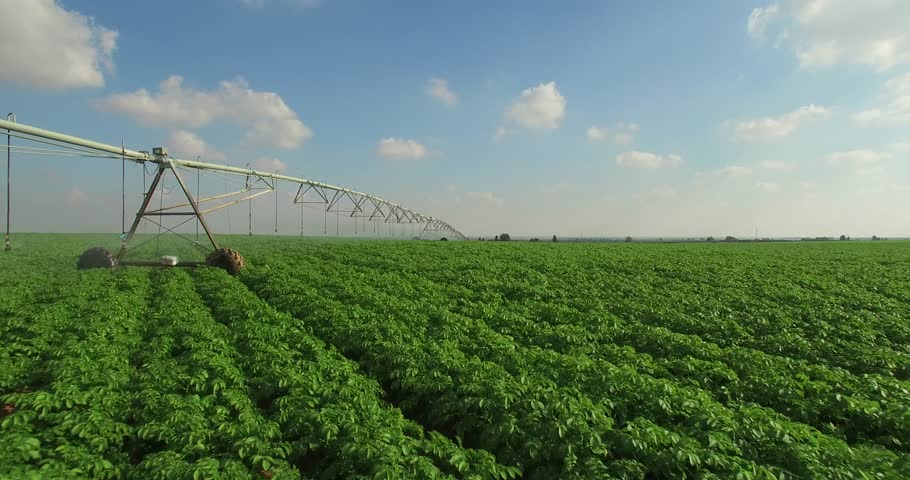 agriculture - sprinklers, Irrigation green field