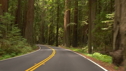 Driving POV on Avenue of the Giants through a portion of Humboldt Redwoods State Park, California; Panasonic GH4.