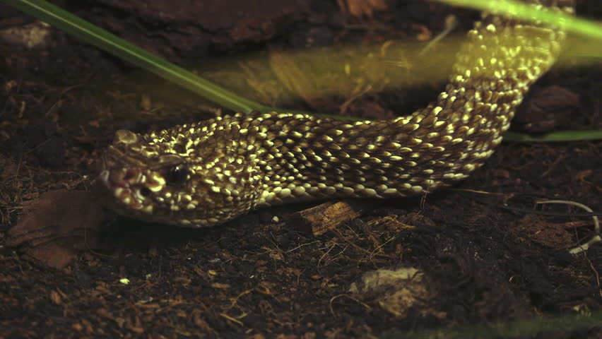 close up of an a snake with its head, Ultra hd 4k, real time #14090339