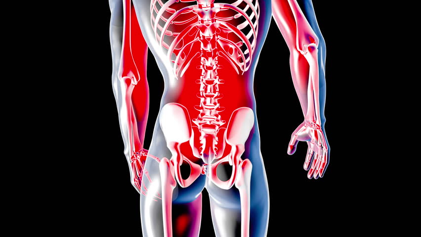 3d animation illustrating the human anatomy,skeleton muscles stock, Muscles
