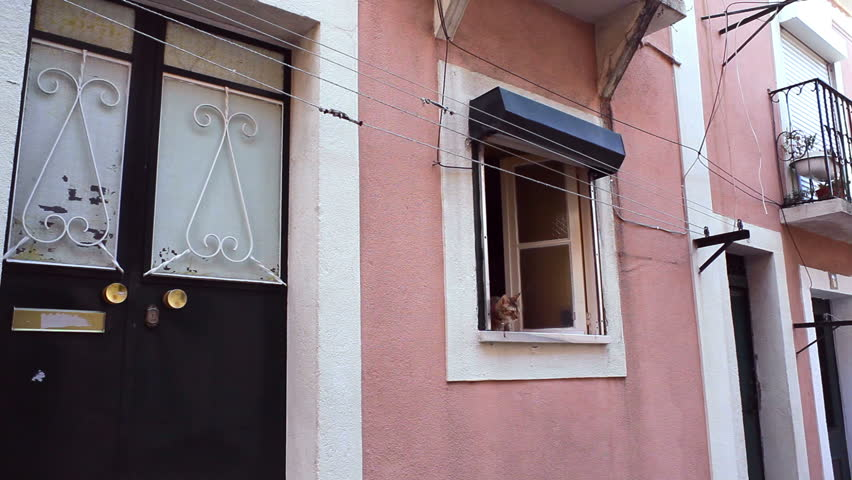 Cat looks out the window, atmosphere in Lisbon, Portugal
