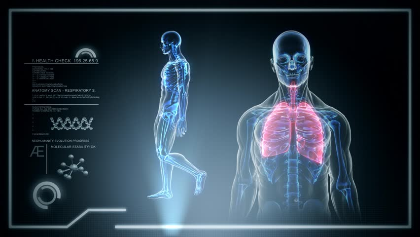 Human Pulmonary System Stock Video Footage 4k And Hd Video Clips