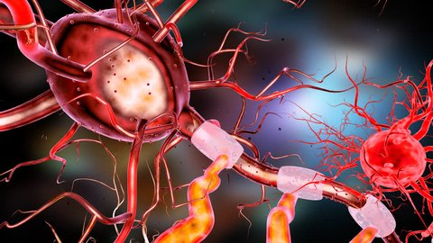 Supportive tissue of the nervous system. Neuron structure. Neuron, astrocyte (glial cell), oligodendrocytes, axon. 3D animation