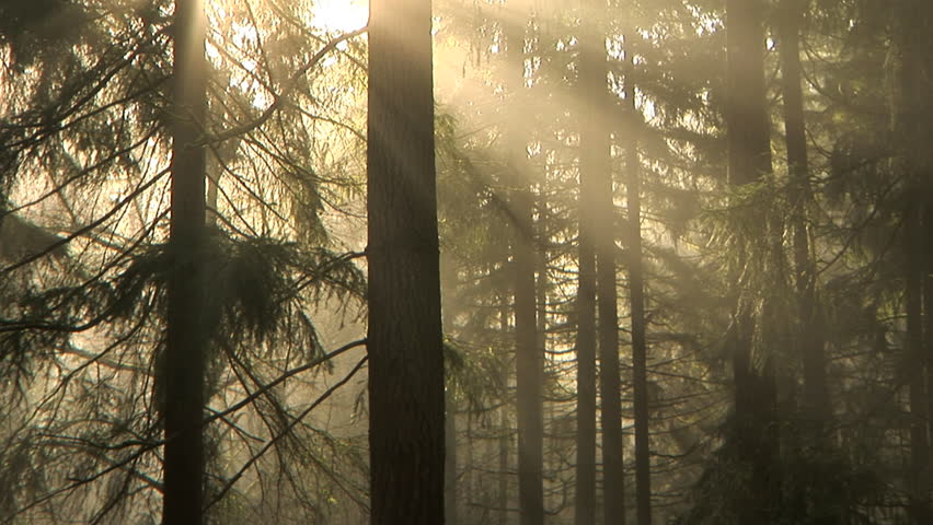 Early morning light and fog drifting through the trees, time lapse