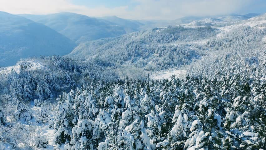 Aerial Snow Covered Trees Drone Footage Landscape Winter Nature Beautiful Europe Forest Mountain Travel White Famous Idyllic Tourism