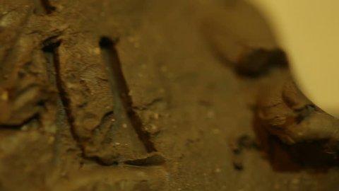 A sumerian clay tablet, ancient cuneiform