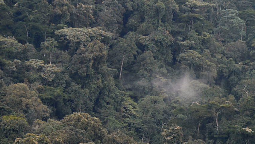aerial view of the forest, Bwindi national park, Uganda, Africa