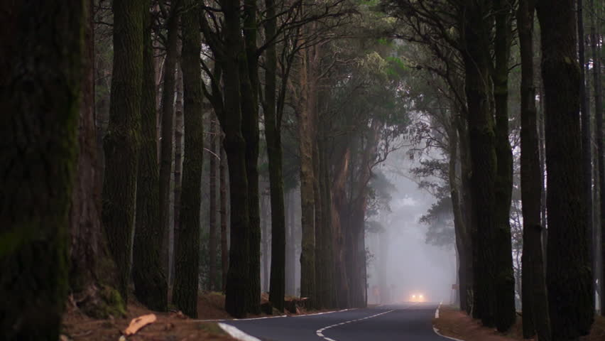 Road Through Forest With Fog And Misty Countryside In Thailand ...