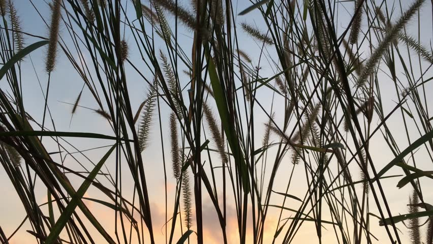 Flora grasses in the soft breeze.