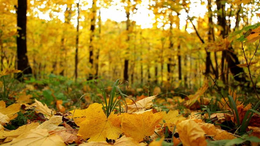 Autumn Leaves Falling  #1458049