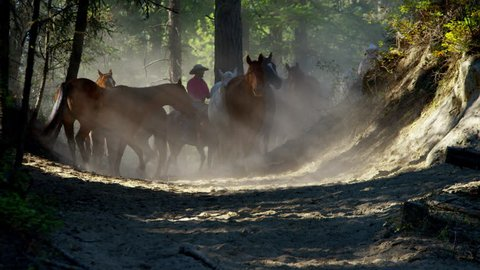 Horses running in Roundup on Dude Ranch with Cowboy Riders