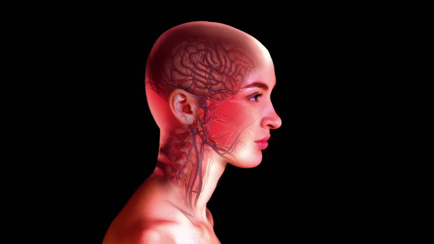 Stock Video Of Internal Head Anatomy Profile Of Woman39s