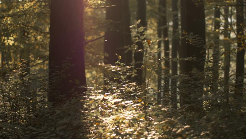 Golden autumn in forest | Shutterstock HD Video #14789749