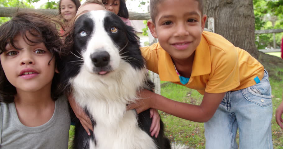 Image result for border collie dog, hugging a child
