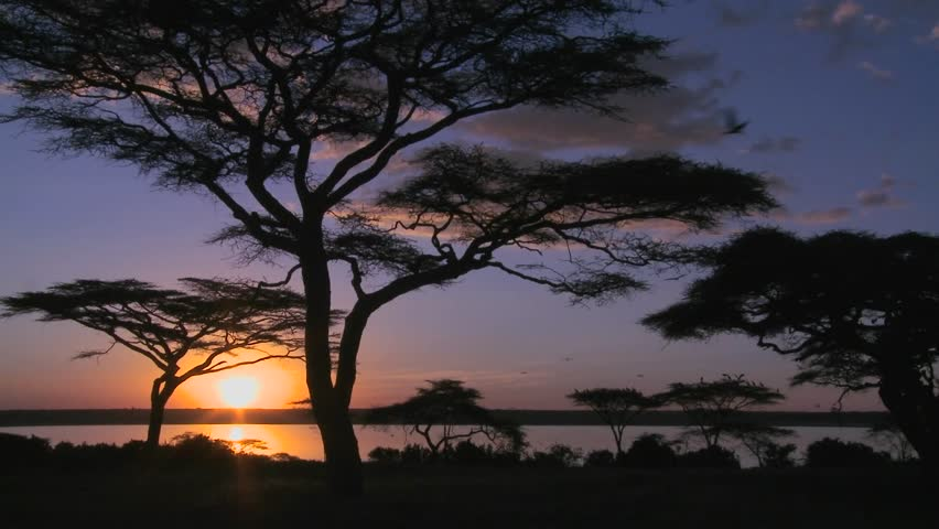 Gorgeous and majestic shot of sunrise on the African plains with acacia trees foreground.