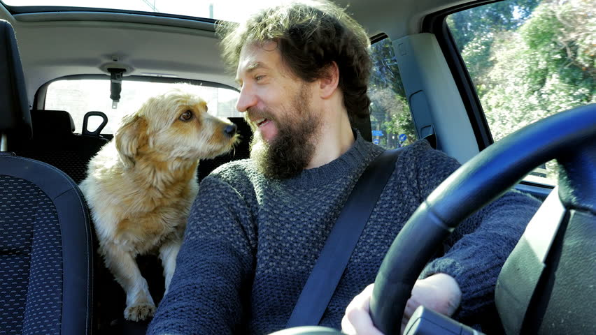 Happy dog in love with man licking him in the face while driving car