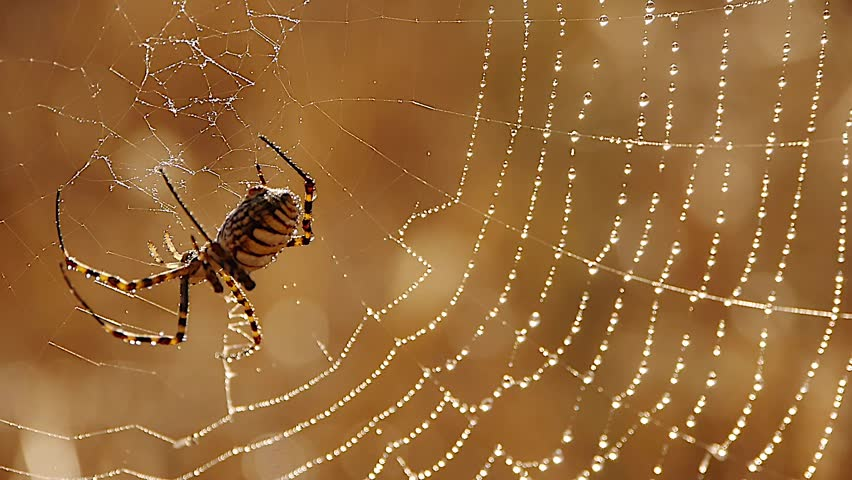spider silk and water