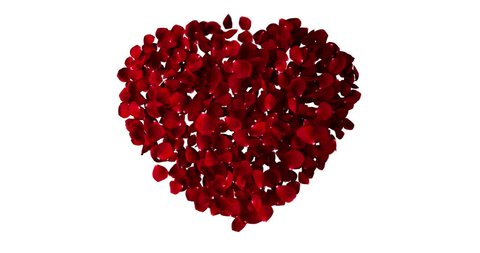 red heart of rose petals flying with vortex on white background, love and valentine day concept, zoom in movement camera
