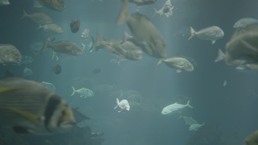 Kuwait Aquarium. Close up shot of exotic fish swimming around the aquarium. | Shutterstock HD Video #14930419