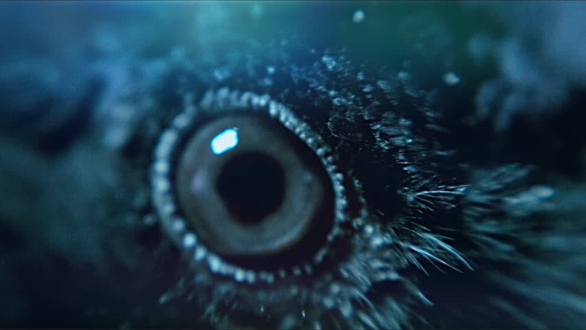 Raven. Eye of the crow. Macro. | Shutterstock HD Video #14983792