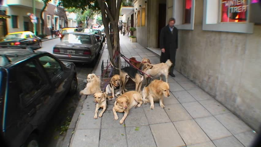 BUENOS AIRES, ARGENTINA - CIRCA 2009: Pets are tied up on leashes on street circa 2009 in Buenos Aires, Argentina.