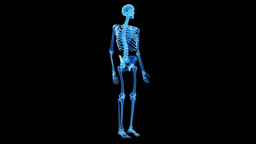Medical 3d Animation Of The Skeletal Foot Stock Footage Video