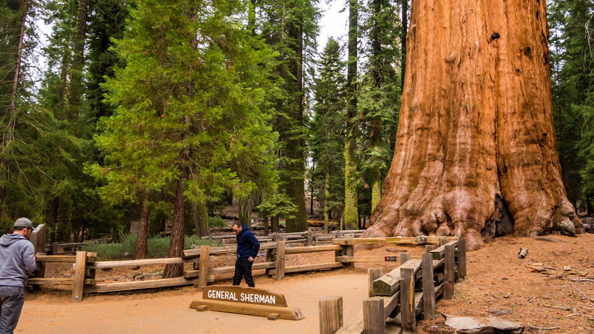 Super LOS ANGELES: 14 DEC: Timelapse View Of Sequoia National Park And  KO39