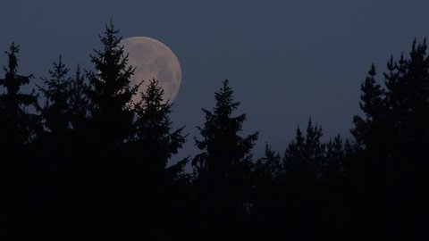 Early morning in the Spring Forest with Birds chorus and full Moon setting.