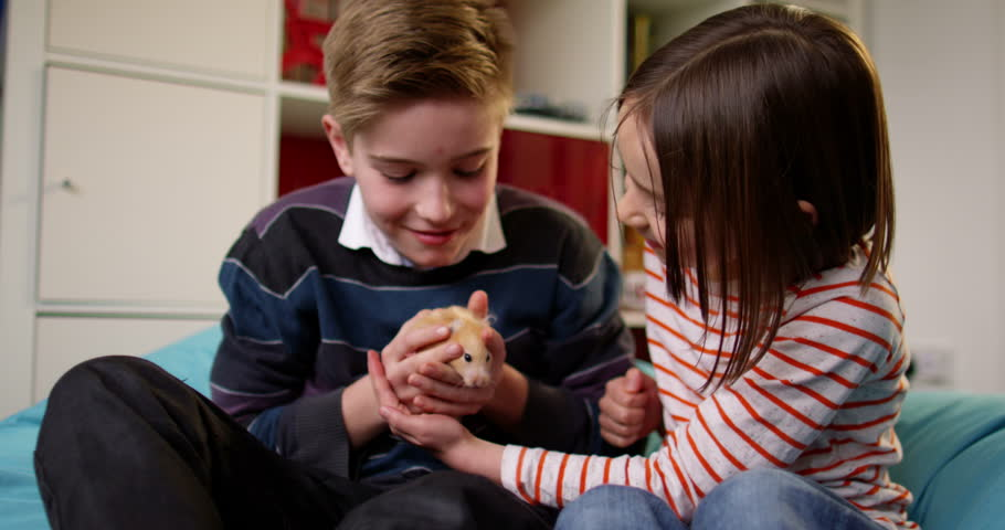 Littel girl and her elder brother play with their pet guinea pig.