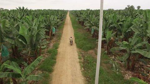 Motor biker riding trough banana plantation