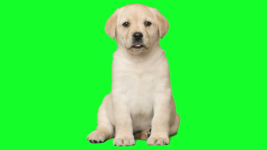 Header of puppy