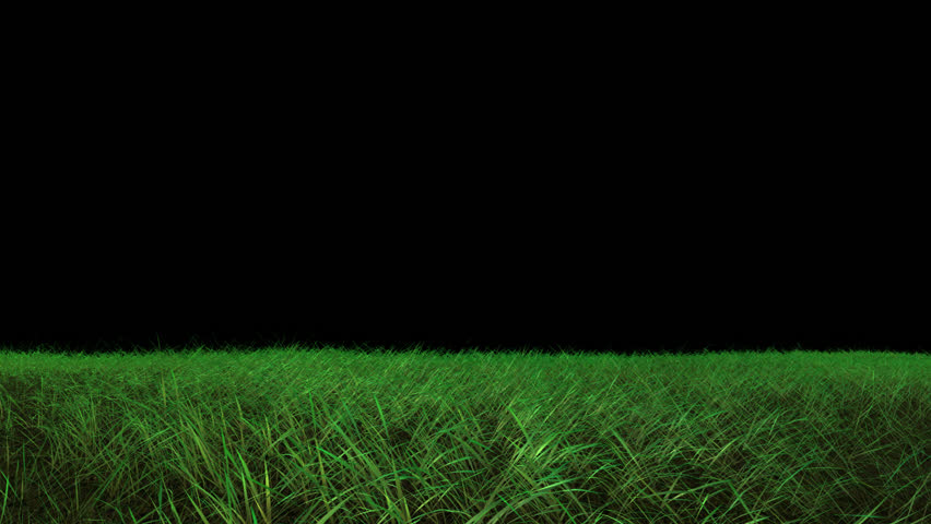 tall green grass field. Tall Green Grass Blowing In The Wind. With An Alpha. Stock Footage Video 15691369 | Shutterstock Field I