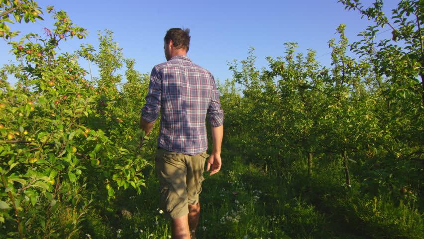 Farmer inspecting crops on the farm Bramletye Fruit Farm, Forest Row, Sussex, UK July, 2015 | Shutterstock HD Video #15692137