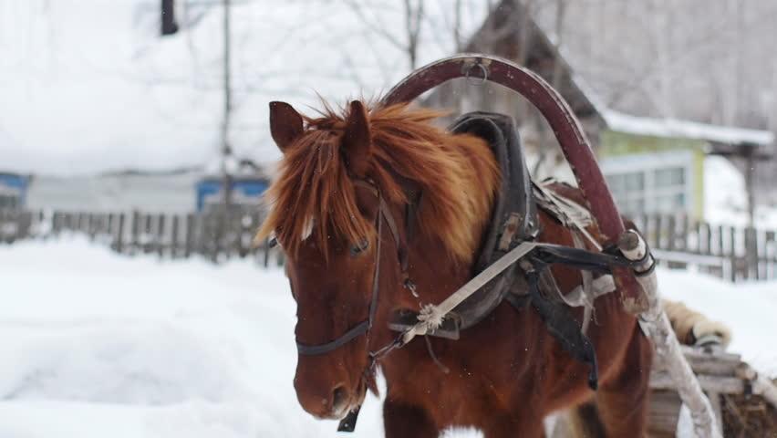 horse drawn sleigh and man