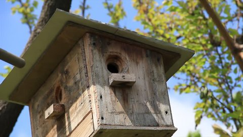 Black starling flew into one of the wooden apartment birdhouses