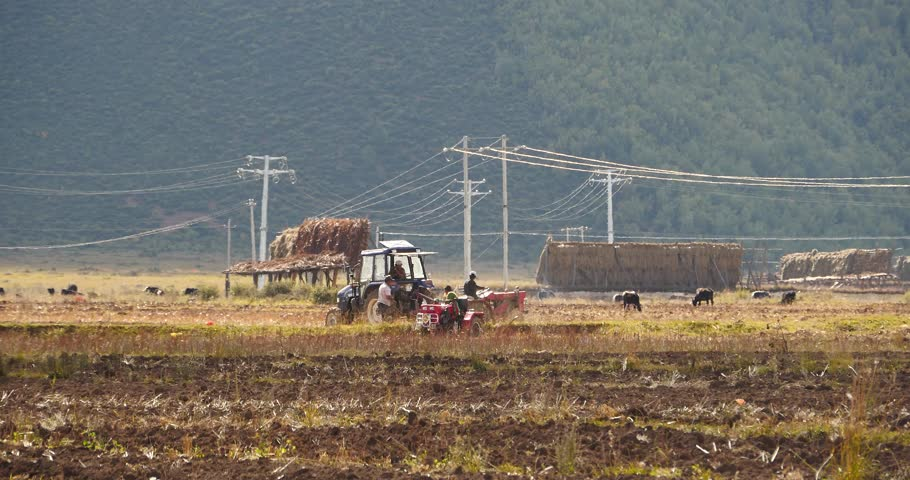 Oct 09,2015:4k tibetan people use farm tractor Arable land in shangrila yunnan,china. gh2_10460_4k