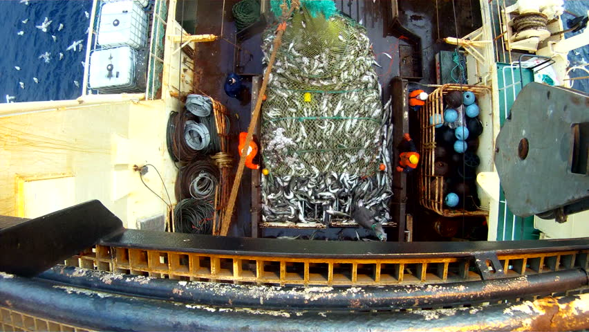 Raising of a full net on the fishing trawler. Fishing of a cod in the Norwegian Sea.