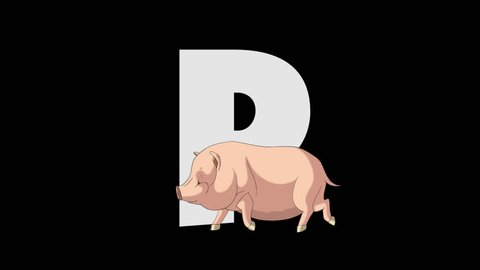 Letter P and Pig (foreground) Animated animal alphabet. footage with alpha channel. Animal in a foreground of letter.