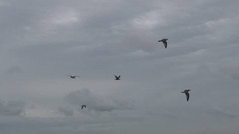 Seagulls try to fly into the wind against a dark cloudy sky.