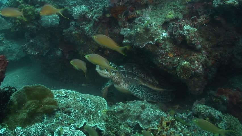 Green Turtle | Shutterstock HD Video #1600789